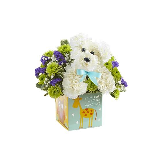 It\'s a-DOG-able™ Boy   1-800-Flowers Flowerama Ankeny, # 437