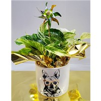 5_in_Dog_Planter_with_Pinwheel__2_-_19.99