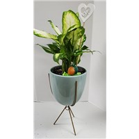 5_in_Planter_in_Stand_with_LOVE_Pick_-_29.99