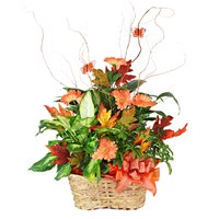 green-plant-orange-monarch-butterfly-fall-decor-in-a-basket