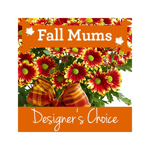 Designer_Choice_Mum_Title_for_Fall_Category